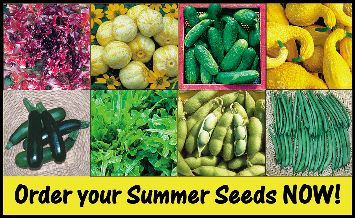 order summer seeds now small